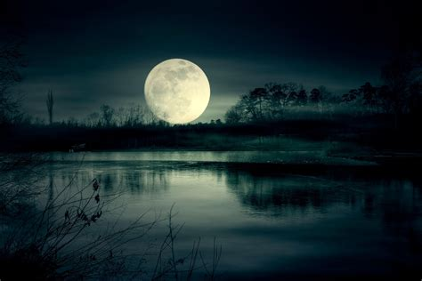 How Moonlight Sets Nature's Rhythms | Science