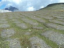 Frostmusterboden – Wikipedia