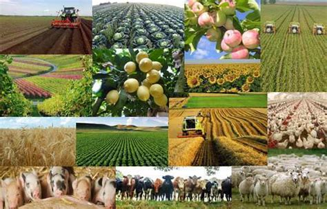 Agriculture is forecast to decline marginally by 0